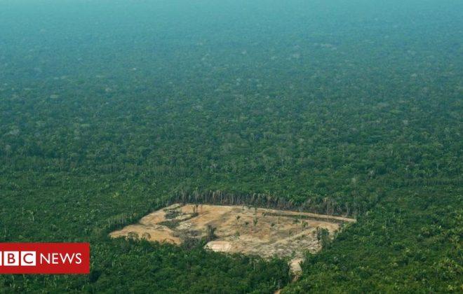 odlesňovanie amazonského pralesa
